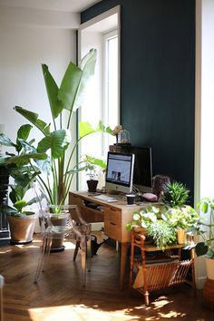 green plants against dark wall. / sfgirlbybay