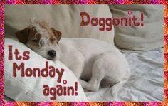 Monday-63911