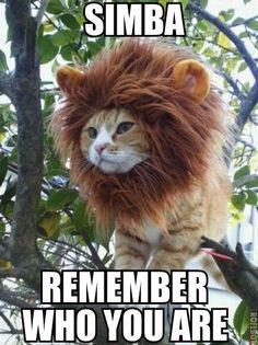 I really, really love the lion king!