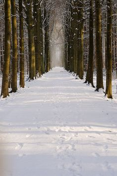 Snowy lane in forest, Belgium