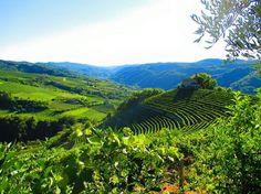 Monferrato - Asti
