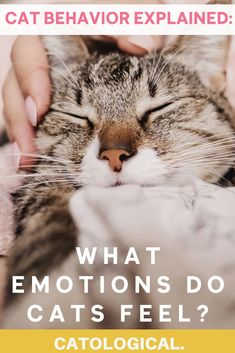 We know cats have basic feelings, such as being tired, playful, or hungry. But what about real emotions like fear, anger, happiness, or grief? Truth be told, feline furballs have larger emotional capacities than you might think. #cats #catbehavior #catbehaviorexplained #catfacts #catcare