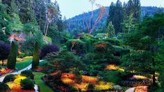this is a photo of a perfect garden