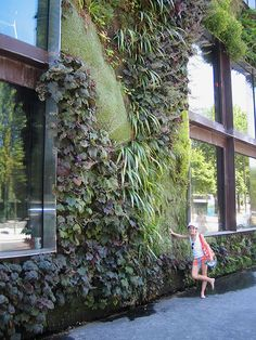 vertical planted wall with heuchera and grasses
