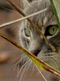 """thegreatcatbog:  """" If You Love Cats - Click Here For 1000's More - http://thegreatcatbog.tumblr.com  """""""