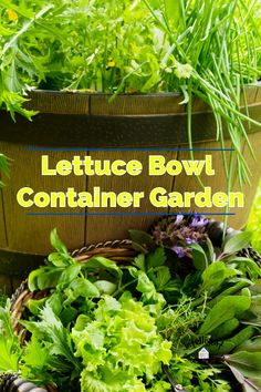 Growing lettuce in small containers is easier than you think. Lettuce bowl garden or Salad bowl garden, no matter what ou call it, they are easy to grow. Use a sunny windowsill, deck, porch or any space you can stick a small container garden. #saladbowl #lettucebowl #containergarden #indoorgarden How To Make Eggs, How To Make Salad, Growing Marigolds, Bountiful Garden, Salad Toppings, Growing Lettuce, Small Tomatoes, Growing Seeds, Seed Packets