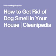 How to Get Rid of Dog Smell in Your House | Cleanipedia