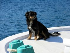 Greece, Island, Dogs, Animals, Greece Country, Animales, Animaux, Islands, Animal Memes