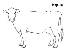 cow drawing draw drawings step cattle easy sketch cartoon pencil trees simple painting tree sketches steps how2drawanimals patterns learn ac