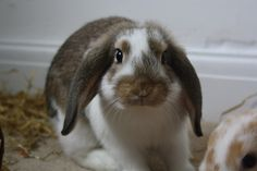 Bunny Will Pose for a Treat - May 12, 2011