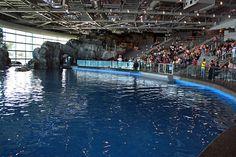 Chicago_Shedd_Aquarium's Oceanarium Amphiteater