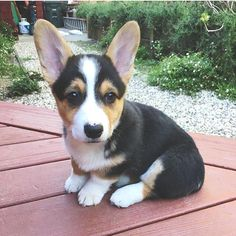 Posted by @corgistagrams