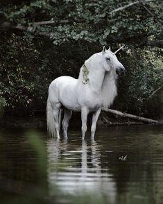PRE stallion Expres Pyramid as unicorn, photo Emmy Eriksson Unicorn And Fairies, Unicorn Fantasy, Real Unicorn, The Last Unicorn, Unicorn Horse, Unicorns And Mermaids, Unicorn Art, White Unicorn, Magical Creatures