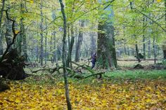 http://www.drzewa.puszcza-bialowieska.eu/