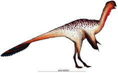 Nankangia_Restoration.jpg (2829×1774) - Dinosauria, Theropoda, Oviraptorosauria, Caenagnathoidea. Auteur : Danny Cicchetti, 2013.