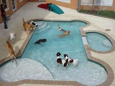 this pool is at a doggie daycare facility. wouldn't it be great to have?