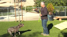 """When Yahoo TV visited Cesar Millan at his dog psychology center in Santa Clarita, California, he told us that the 43-acre site is """"The most amazing dog park in the world."""" We'd have to agree, it really is just that."""