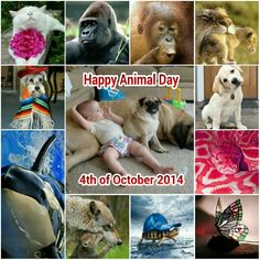 Happy Animal Day, 4th October 2014