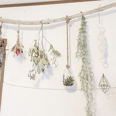 Leaf Flowers, Dried Flowers, Air Plant Display, Stick Art, Wood Sticks, Winter Project, My Room, Flower Decorations, Interior And Exterior