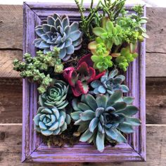 Vertical Framed Succulent Garden by SucculentWonderland on Etsy, $60.00
