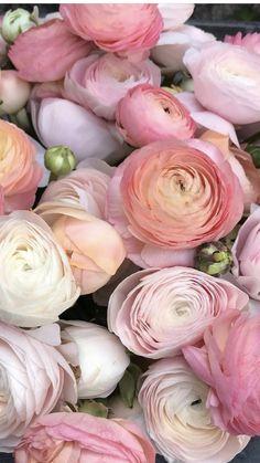 Rose Like Flowers, Flowers For Sale, Burgundy Flowers, Pretty Flowers, Fresh Flowers, Ranunculus Wedding Bouquet, Ranunculus Flowers, Wedding Flowers, Flowers Wholesale