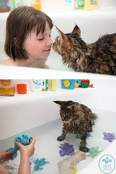 """"""" Cat Loves Water?!? ' If this is true, we have no defense against them? There is no stopping them.....Evil!!!"""