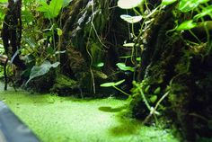 Vivarium pond. Love the hanging plants. I normally hate duckweed but here it looks awesome.