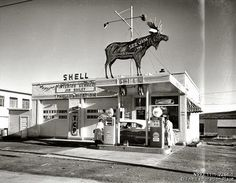 Jim Bailey's Shell service station with an eye catching life-sized Moose on the roof. 1953