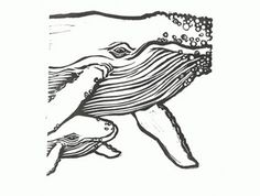 Lino-cut 'Humpback whale, cow & calf'