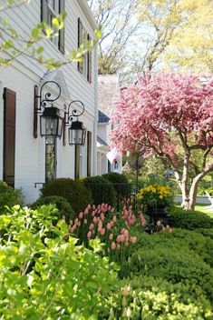 pretty pink tulips: Tulips in Bloom Beautiful Gorgeous, Beautiful Gardens, Flower Landscape, Blossom Trees, Cherry Blossom, Pink Tulips, Spring Home, Spring Garden, Front Yard Landscaping