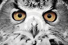 Wise Eyes - Download From Over 57 Million High Quality Stock Photos, Images, Vectors. Sign up for FREE today. Image: 7678185