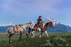 Wrangler and his horse pass in front of the Alpenglow light and the jagged peaks of the Grand Teton mountain range in Jackson Hole, WY. Western Horse Riding, Cowboy Horse, Cowboy Art, Cowboy And Cowgirl, Cowboy Images, Bucking Bulls, Teton Mountains, Home On The Range, Mountain Man