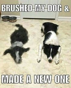 Funny Animal Pictures Of The Day 23 Pics - Funny Dog Quotes - Probably the best of these memes weve seen! That had to take some time! The post Funny Animal Pictures Of The Day 23 Pics appeared first on Gag Dad. Cute Animal Memes, Funny Animal Quotes, Cute Funny Animals, Cute Baby Animals, Dog Quotes, Animal Funnies, Animals Dog, Funny Dog Memes, Funny Dogs