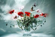 Filigrane Schönheiten by Christine Ellger on 500px