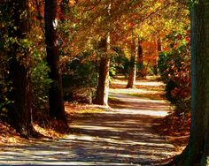 Nature Photography  A Walk In The Park  Fall by PetitePastiche, $30.00