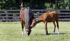 Rachel Alexandra and her foal