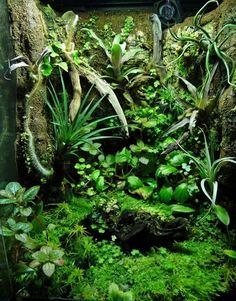 Terrarium Decor Arachnidism Pinterest Terraria