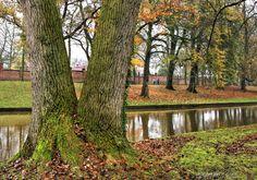peeking through the tree    Brugge, Belgium
