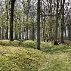 Trench line in Delville wood | Flickr - Photo Sharing!