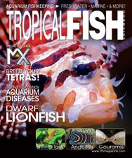 The April 2012 issue of TFH is a marine-themed issue with articles on dwarf lionfish, semicircle angelfish, sea pens, and brain corals. On the freshwater side, there are kissing gouramis, imperial tetras, and much more.