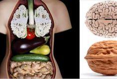 Эти 9 видов пищи исцеляют именно те органы, на которые они похожи! - Jemchyjinka.ru