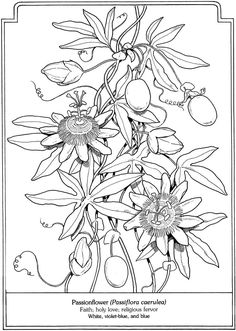 Language of Flowers sample pages @ Dover Publications