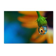"""Trademark Art """"Puddle of Petals"""" by Steve Wall Photographic Print on Wrapped Canvas Size: 12"""" H x 19"""" W x 2"""" D"""