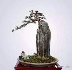 Minimalis bonsai