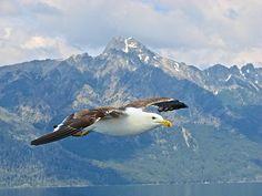 """El vuelo"". Lago Nahuel Huapi, Bariloche, Argentina. Foto tomada por mí :)"