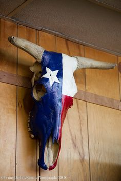 Texas pride over dislike of animal heads in general.  Could make an exception with this beauty.  I'd find a spot in my backyard for this piece.