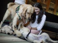 Colleges turn to therapy dogs for student stress relief -- USAToday.com