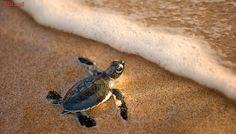 Instituto Biota registra primeira desova de tartarugas em Maceió