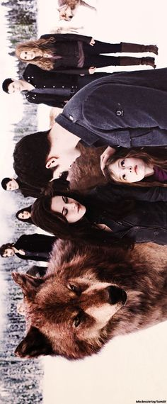 bdp2 This is actually really pretty looking Twilight Breaking Dawn, Twilight New Moon, Twilight Jacob, Twilight Renesmee, Twilight Book, Twilight Cast, Twilight Edward, Breaking Dawn Part 2, Twilight Saga Series