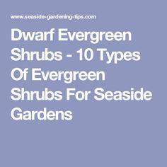 Ten Dwarf Shrubs That Will Change the Way You Garden Garden Front